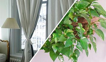 Vaporetto Diffusion tessuti e piante